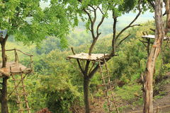 Nature forest trees. Beautiful landscapes from the top of the tree house Stock Photo