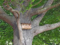 Tree house bird box nest wildlife Royalty Free Stock Photos