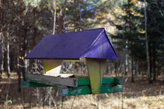 Tree house for the birds, cheerful apartment Royalty Free Stock Photography