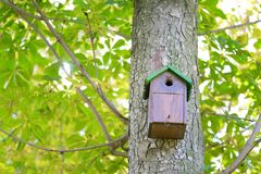 Tree house for birds Royalty Free Stock Photography