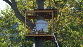 Tree house on a Bright Spring Day stock video
