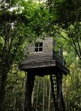 Tree house in forest. Abondaned wooden tree house somewhere deep in the forest of Moscow. Who coul be living there stock photos