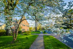 Tree and house in Guilford, Baltimore, Maryland.  royalty free stock images