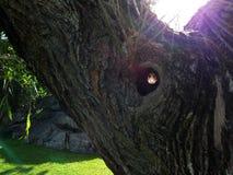 Tree House Royalty Free Stock Photo