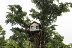 Tree House in the Jungle in Vanuatu Stock Photos