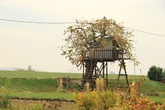 Tree house for kids in the garden royalty free stock photo