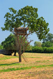 Tree House Royalty Free Stock Photography