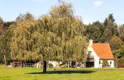 Tree beside a house Stock Photos