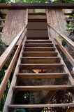 Tree House. Stairs to the Tree House Stock Photo