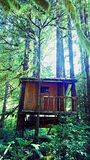 Tree house. The the woods Stock Images