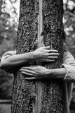 A Tree Hug Stock Photos