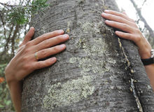 Tree hugger Royalty Free Stock Photos