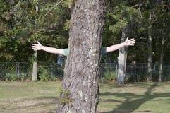 Tree Hugger Royaltyfri Bild