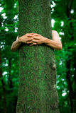 Tree hugger environmentalist. Arms of an environmental activist hugging a tall tree with spring green background Stock Photography