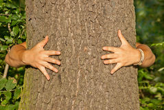 Tree hugger environmentalist Royalty Free Stock Image