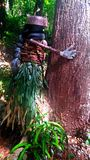 Tree Hugger. Real Tree Hunger found in the jungles outside of Nadi, Fiji Stock Images