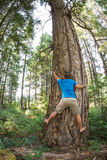 Tree hugger Royalty Free Stock Images