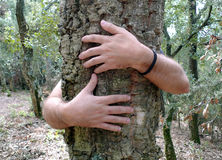 Tree hugging. Close-up of hands hugging tree Stock Photo