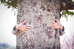 Tree hugging. Stock Photography