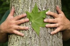 Tree hugging environmentalist Royalty Free Stock Images