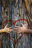 Tree hugging love. Hands of couple in love hugging a tree with painted red heart. Marriage, relationship, love concept Stock Images