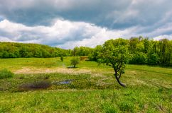 Tree on a hump over the grassy meadow. Among the forest. beautiful nature scenery on a cloudy summer day. people have picnic under the tree in the middle Royalty Free Stock Image