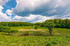Tree on a hump over the grassy meadow. Among the forest. beautiful nature scenery on a cloudy summer day Royalty Free Stock Photography