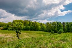 Tree on a hump over the grassy meadow. Among the forest. beautiful nature scenery on a cloudy summer day Stock Photos