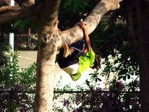 Tree Hung. A little Indian girl trying to climb a tree in the garden Royalty Free Stock Photography