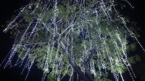 The tree hung with hanging garlands. Christmas theme. White garlands. The tree hung with hanging garlands. Christmas theme. White garlands stock video