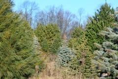 Tree hunting Stock Image