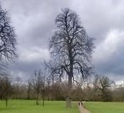 Tree in hyde park. A Picture of  a tree and a small pathway in a green park,in London,The Hyde park Stock Image