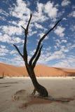 Tree i öken Arkivbild