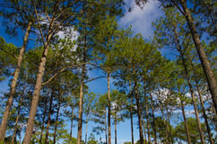 Tree i blå sky Royaltyfri Bild