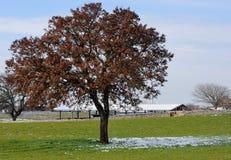 Tree i bygden av Puglia Royaltyfri Fotografi