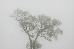 Tree i dimma arkivbilder