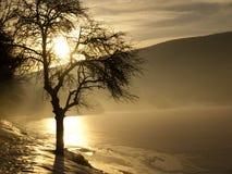 Tree i dimma Arkivfoto