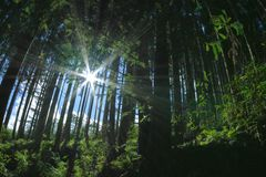Tree i en skog Arkivbild
