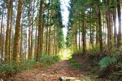 Tree i en skog Fotografering för Bildbyråer