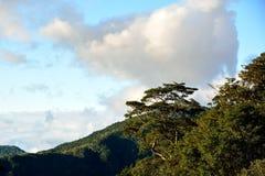 Tree i en skog Royaltyfri Fotografi