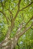 Tree i fjäder arkivbild
