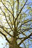 Tree i fjäder Arkivfoto
