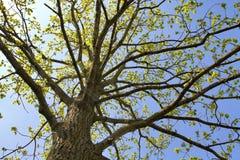 Tree i fjäder Fotografering för Bildbyråer