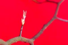 Tree i fjädern Royaltyfria Bilder
