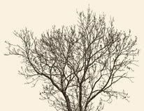 Tree i fjädern Arkivfoton