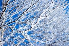Tree i frost arkivfoton