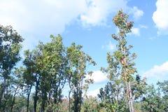 Tree i höst arkivbild
