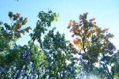 Tree i höst royaltyfri foto