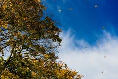 Tree i höst eller fall royaltyfria foton