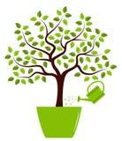 Tree i kruka Arkivfoton